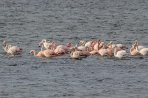 "Flamingo""s Delta tour"