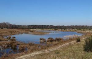 Landschap in Brabant