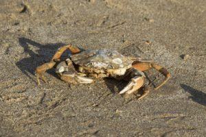 Krab natuurexcursie op Goeree-winter