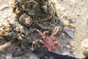 Aangespoelde zeedieren