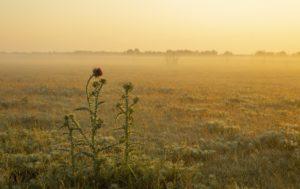 Poesta bij ochtendlicht