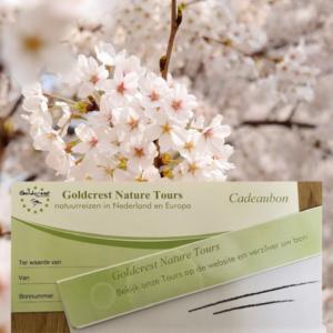cadeaubon goldcrest nature tours
