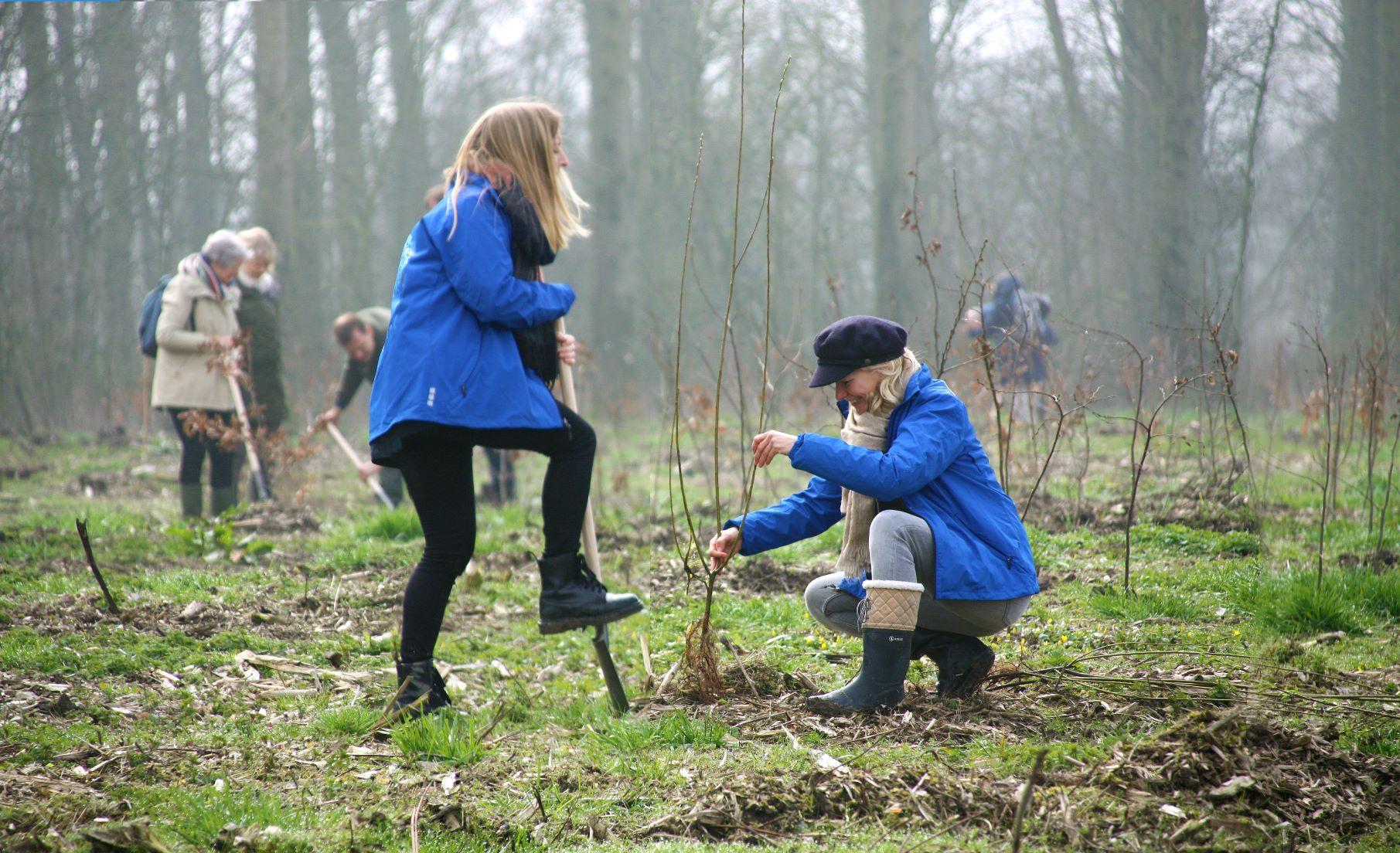 bomen planten in Nederland natuurbehoud
