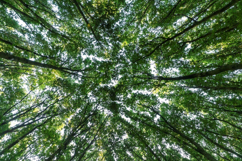Boomkruinen natuurbehoud