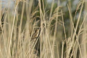 Snor Natuurbeleving in de Vijfheerenlanden
