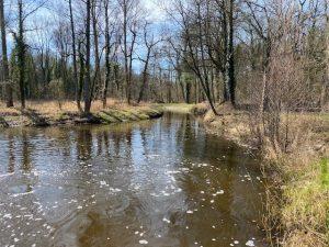 Beek de Boven Slinge in Winterswijk