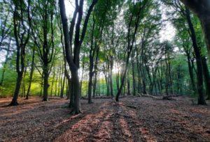 De zon komt door de bomen, dansende bomen Speulderbos