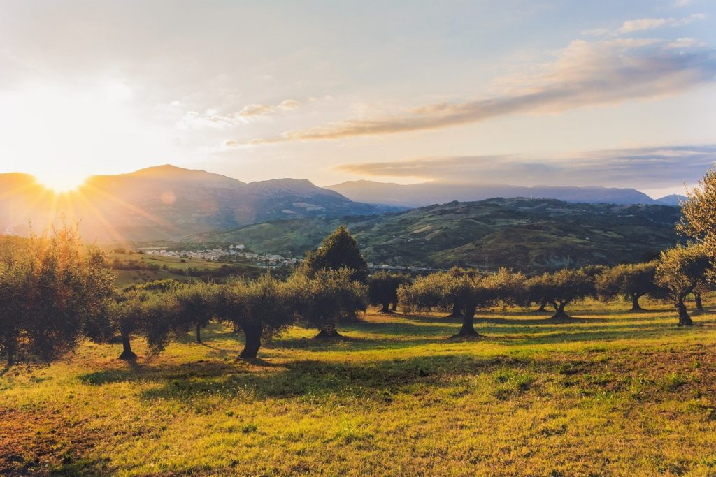 Olijfgaard Griekenland